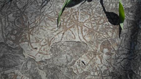 Traços fósseis são encontrados em Sentinela do Sul