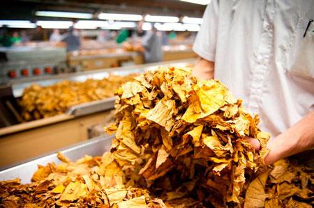 Sindicatos querem que fumageiras abram a compra em dezembro