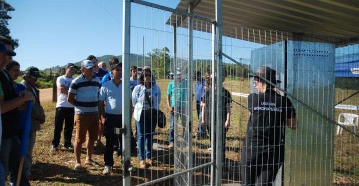 Dia de campo leva informação a produtores de fumo da região em Sertão Santana