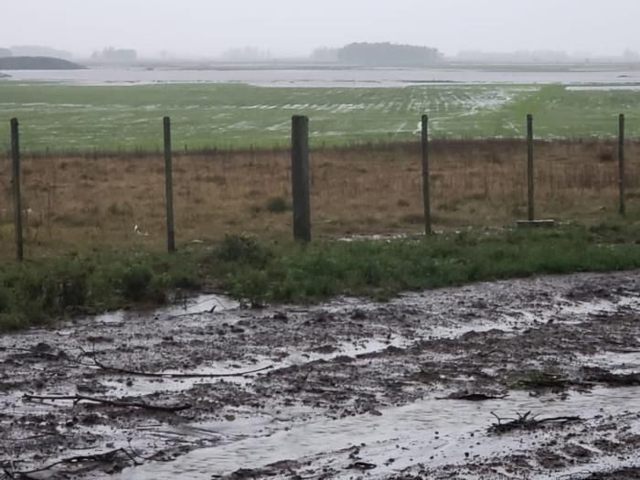 Chuvas afetam o potencial produtivo das lavouras de arroz