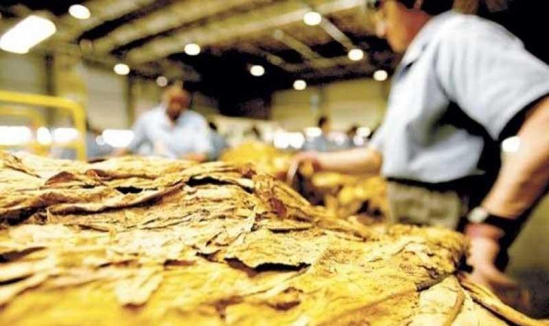 FETAG-RS cobra ação de fumageiras em prol do produtor